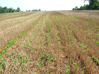 Image of a field with a crop beginning to grow; crop rotation; management BMP