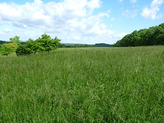 Image of a field planted with grass to protect from soil erosion; pasture planting; vegetative BMP