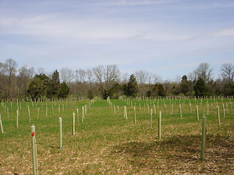 Image of a field with woody plants plotted; tree/shrub establishment; vegetative BMP