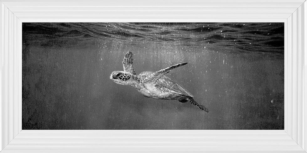 Glistening Turtle