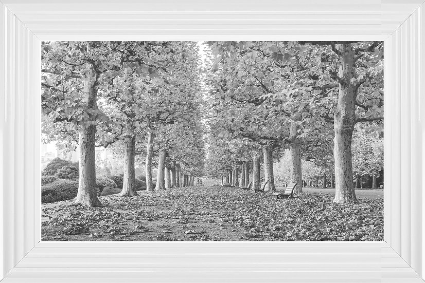 Avenue of Trees BW