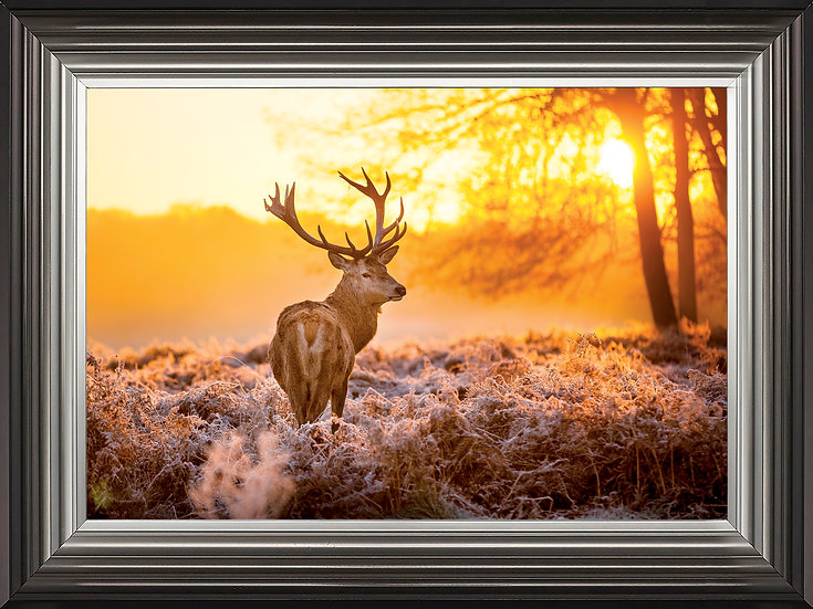 Stag in Golden Sunset