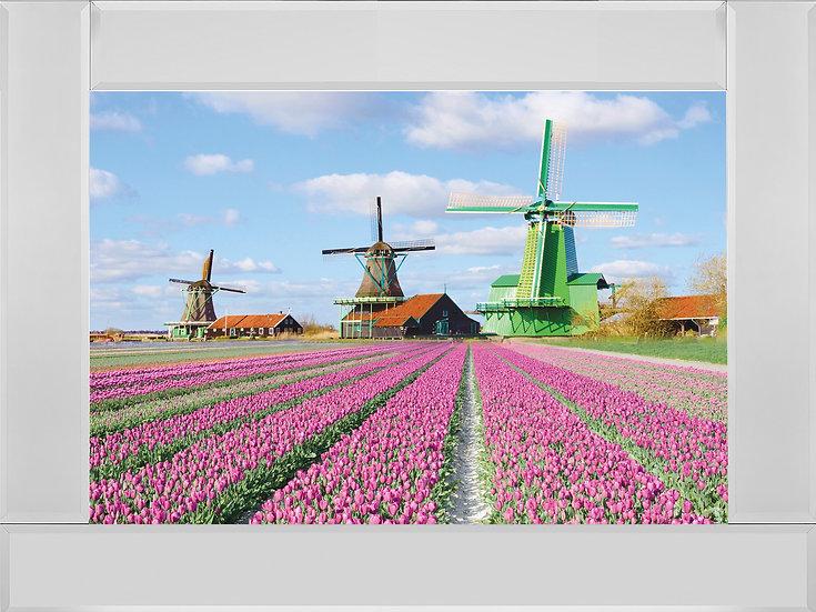 Pink Tulip Fields