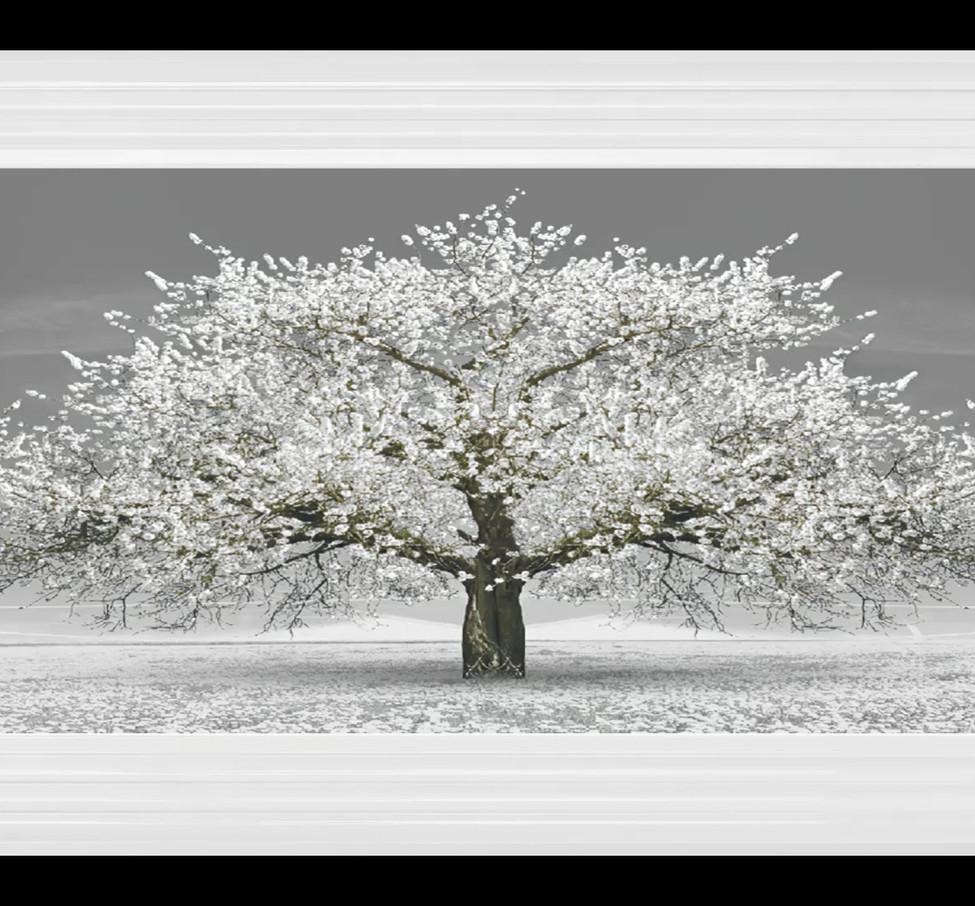 Silver Blossom Tree