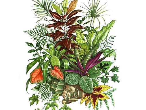 House plants and our pets.