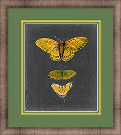 Butterflies On Slate I.jpg