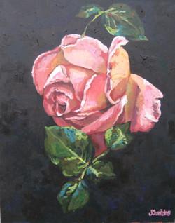 Pink Rose 24x30
