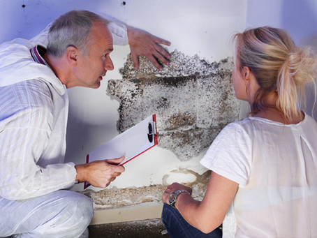Good to Know about Mold