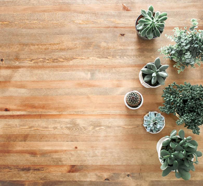 aménagement et entretien de plantes de bureaux