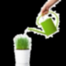 entretien plantes de bureaux