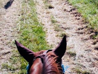 Hund-Pferd-Training