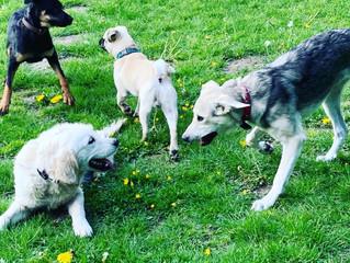Impressionen aus dem Junghunde-Training