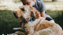 Hund-Kind-Kurs 2021