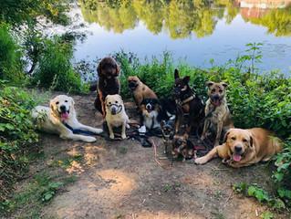 Sommer Impressionen vom Doghouse