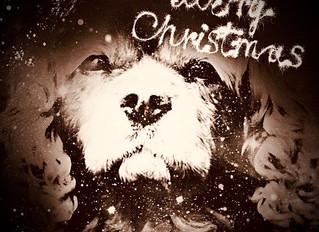 Eine frohes Weihnachtsfest und alles Gute für das Jahr 2020