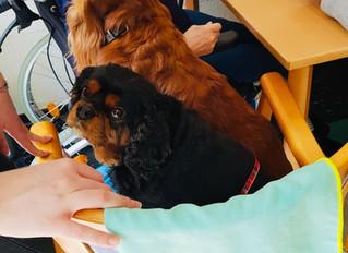 Impressionen tiergestützte Therapie