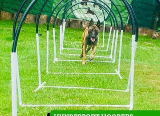 Hundesport Hoopers