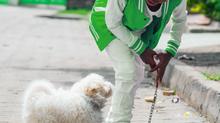 Hund-Kind-Kurs Sommer 2020