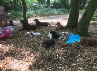 Impressionen Hund-Kind-Kurs Sommer 2018 - Waldpicknick