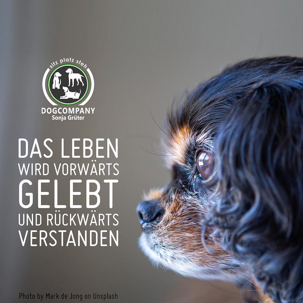 Motivation - Cavalier King Charles - Hundeschule SitzPlatzSteh