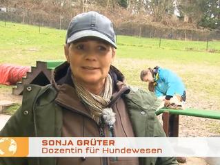 Sonja Grüter im Interview mit RTL zum Beißvorfall einer Old-English-Bulldog mit einem 9 jährigen Mäd