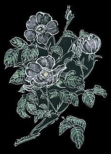 dark beauty PRINT.jpg