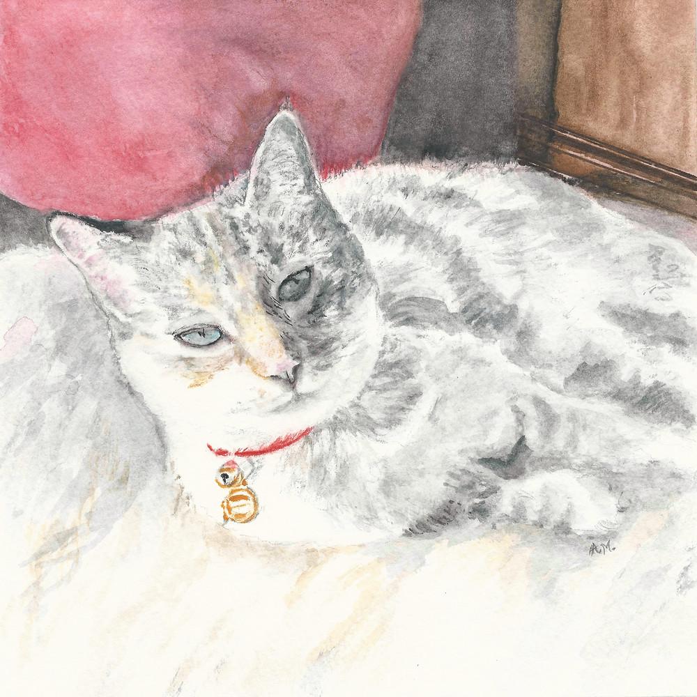 cat animal kitty fur pillow wall wood  blanket