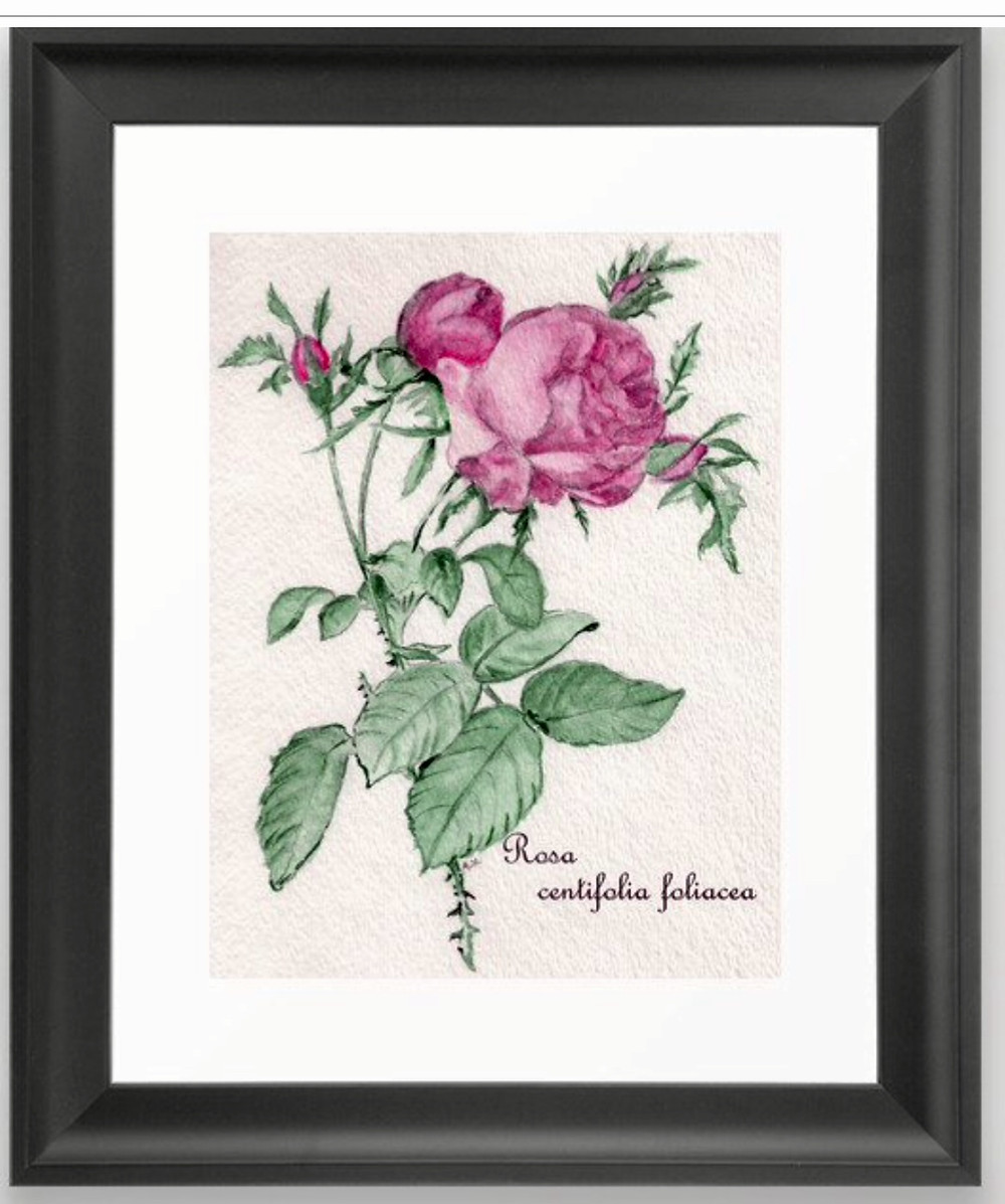 Rose, flower, red, green, plant, art print, framed, watercolor, ink, drawing, illustration