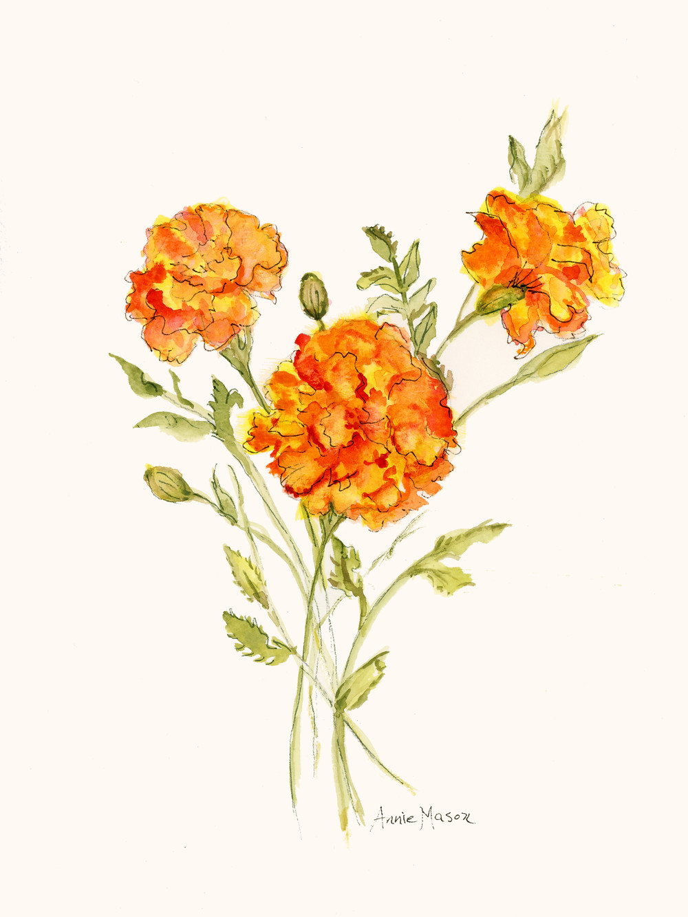 flower marigold yellow orange green leaves petals