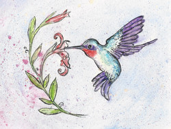 winsome hummingbird