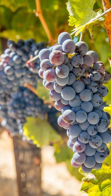 vineyard-columbia-groge.jpg