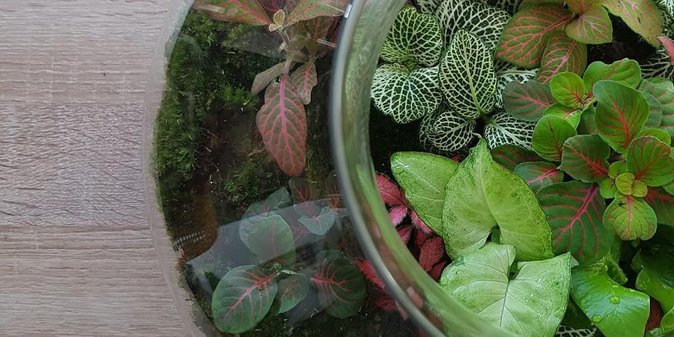 Chieftans  Restaurant & Bar Is Hosting Plant Night