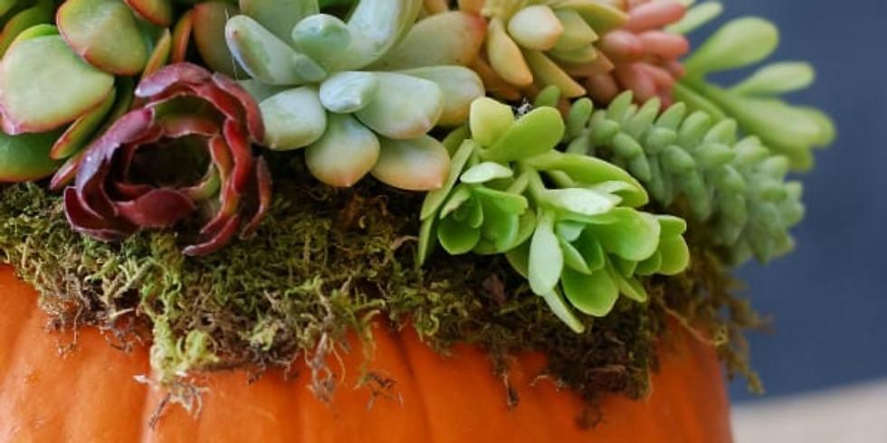 Succulents and Pumpkin Fall Decor