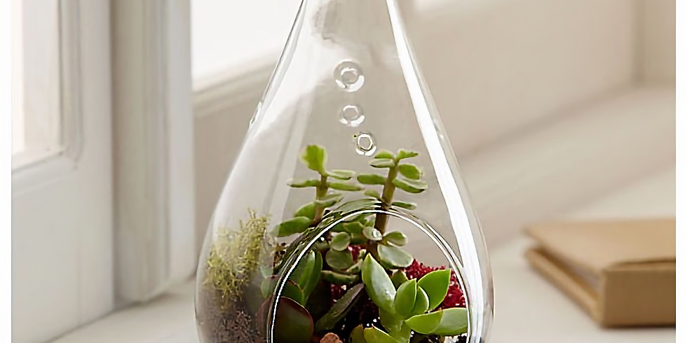 Frog Alley ~Tear Drop Terrariums~SOLD OUT