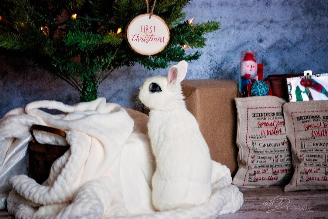 Winnie Christmas 3