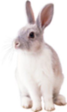 White-Rabbit-PNG-Image.png