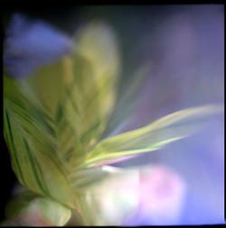 house+plant