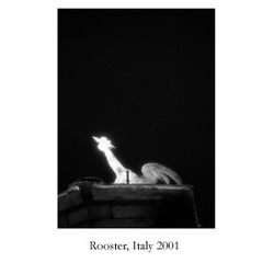 rooster,+italy