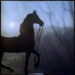 horse+from+costacciaro