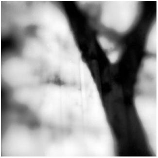 tree+trunk