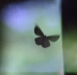 mothonscreen