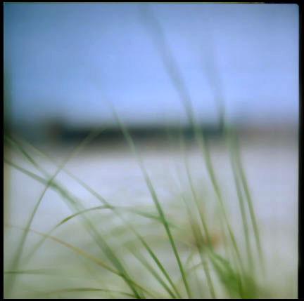 beach+grass
