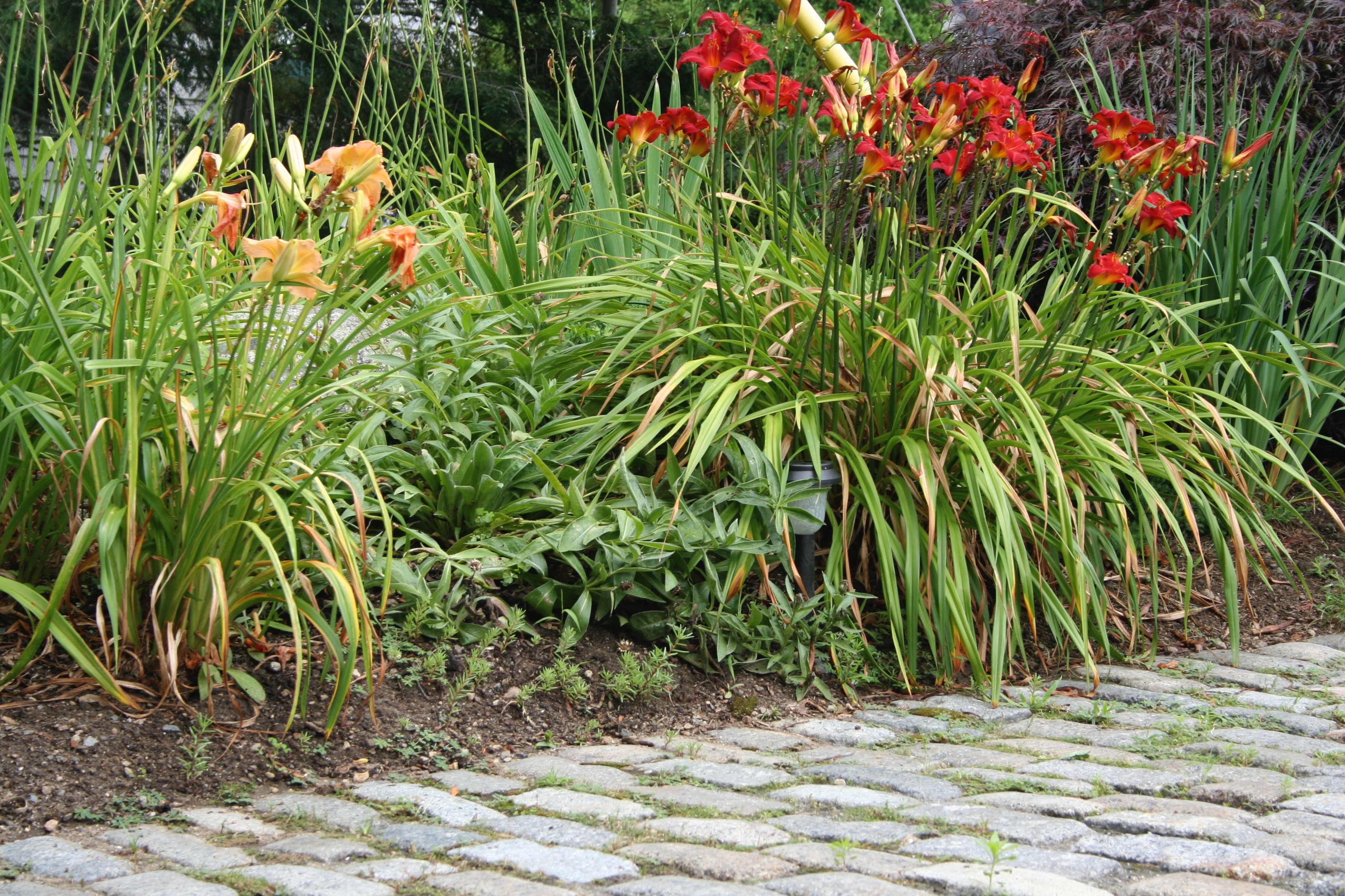 Cobblestone With Daylillies