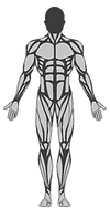 Humanoid 2.png