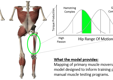 Muscle Modeling: Identify Primary Movers from Movement Results