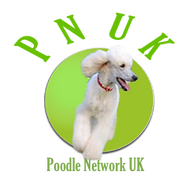 Poodle rescue uk, Poodle rehome uk