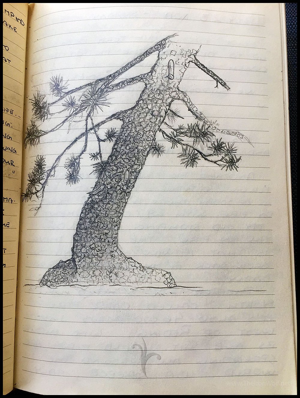 Sketch of teh Pine Tree