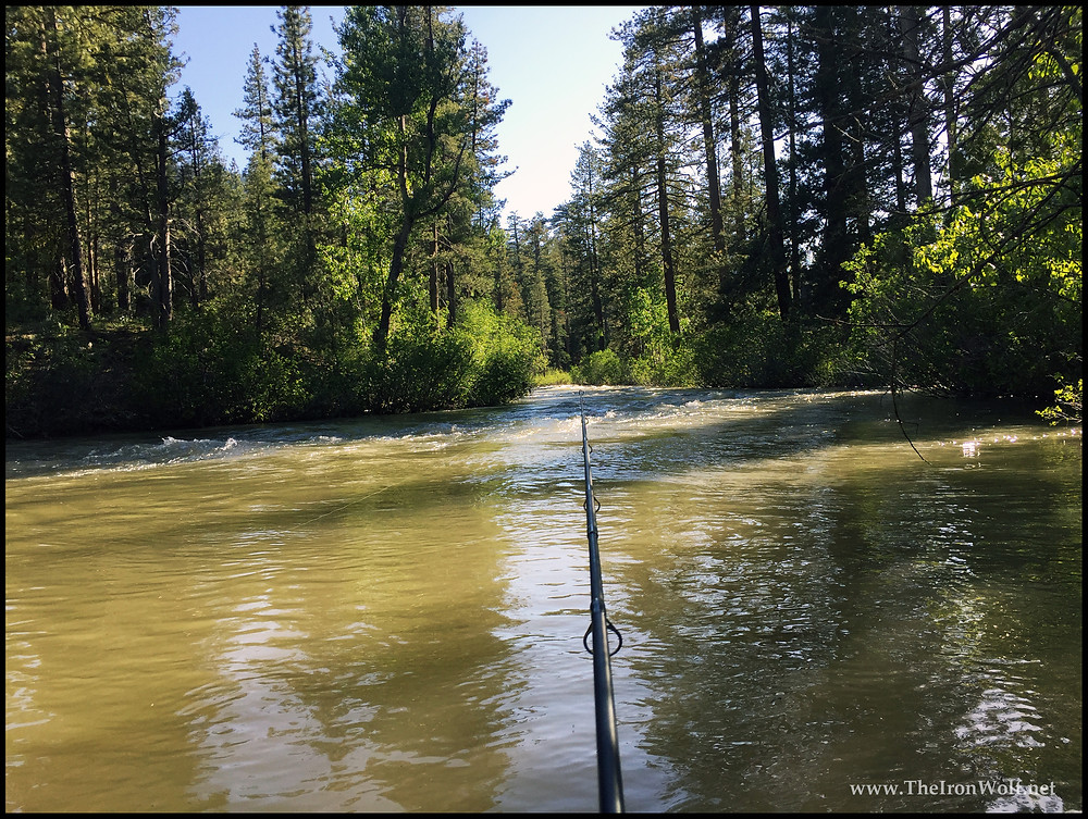Trout Fishing in Sierra Nevada Mountains, California