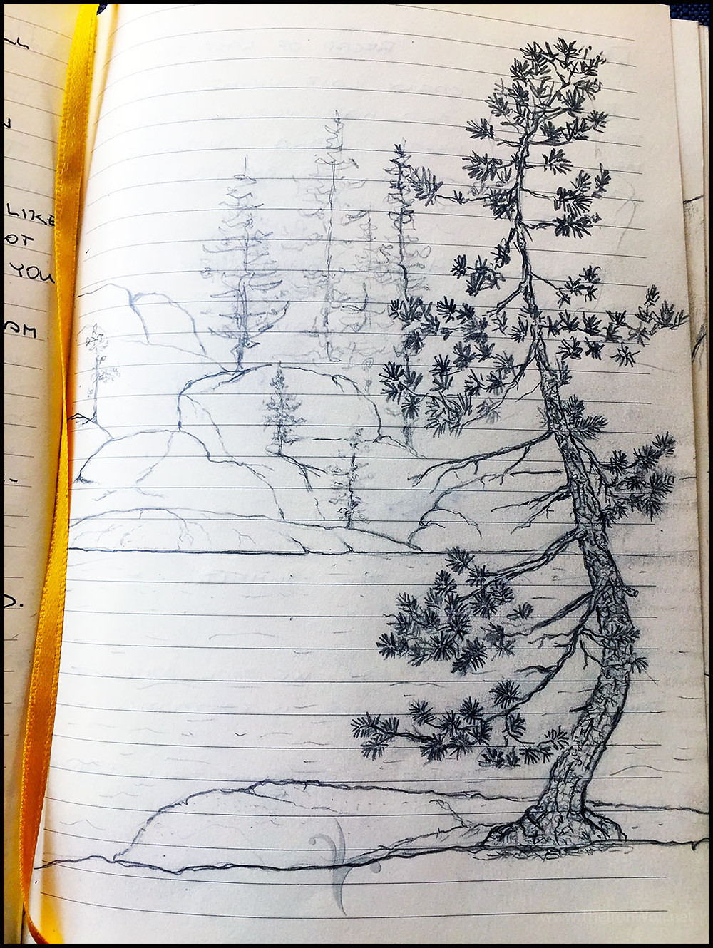 Sketch of the Pine Tree