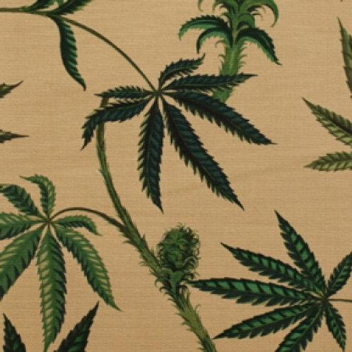 Cannabis Sativa - Dark Tea